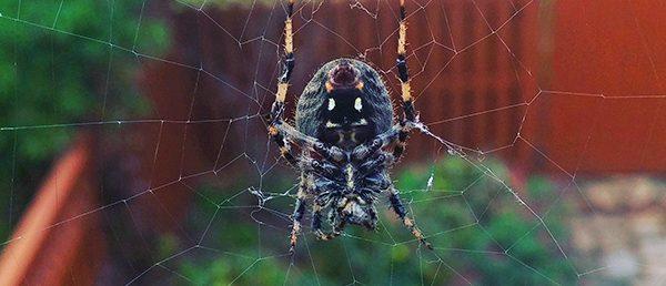 Really big spider