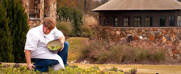 Chef Rob McDaniel picks baby lettuces in SpringHouse garden.